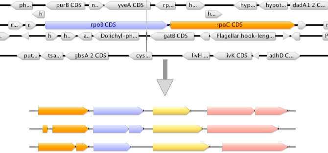 Selection of mlst genes